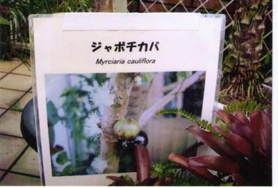 20121124_nozomi